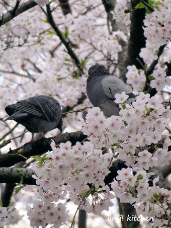 Sakurahato