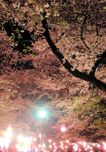 Sakura_1_4