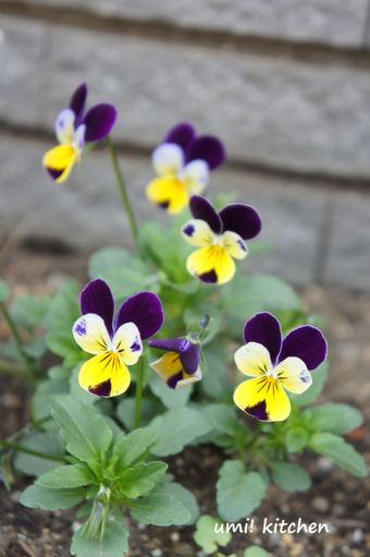 2011_spring_2_3