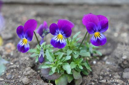 2011_spring_3_2