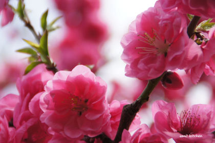 2011_spring_4_2
