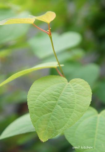 Hart_leaf