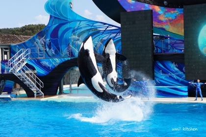 Sea_world_2