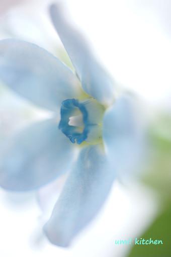 Bouquet_32