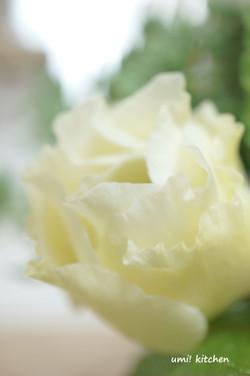Bouquet_44